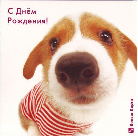 Поздравление с днем рождение с собачкой